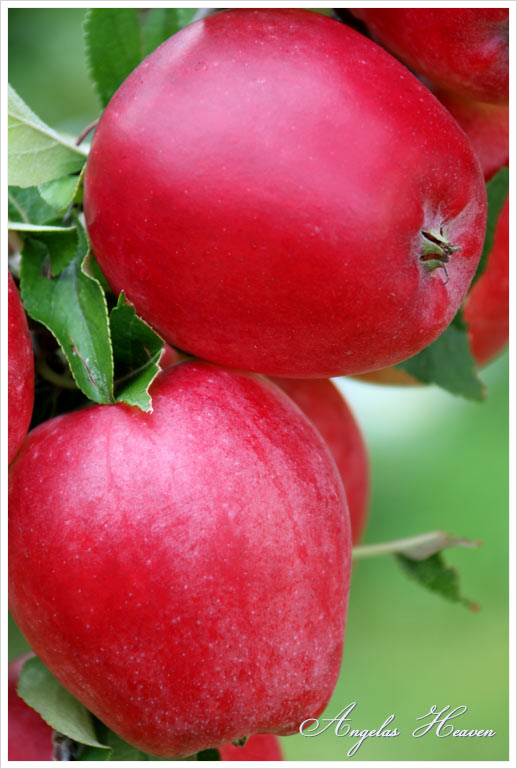 Health-benefits-of-eating-apples